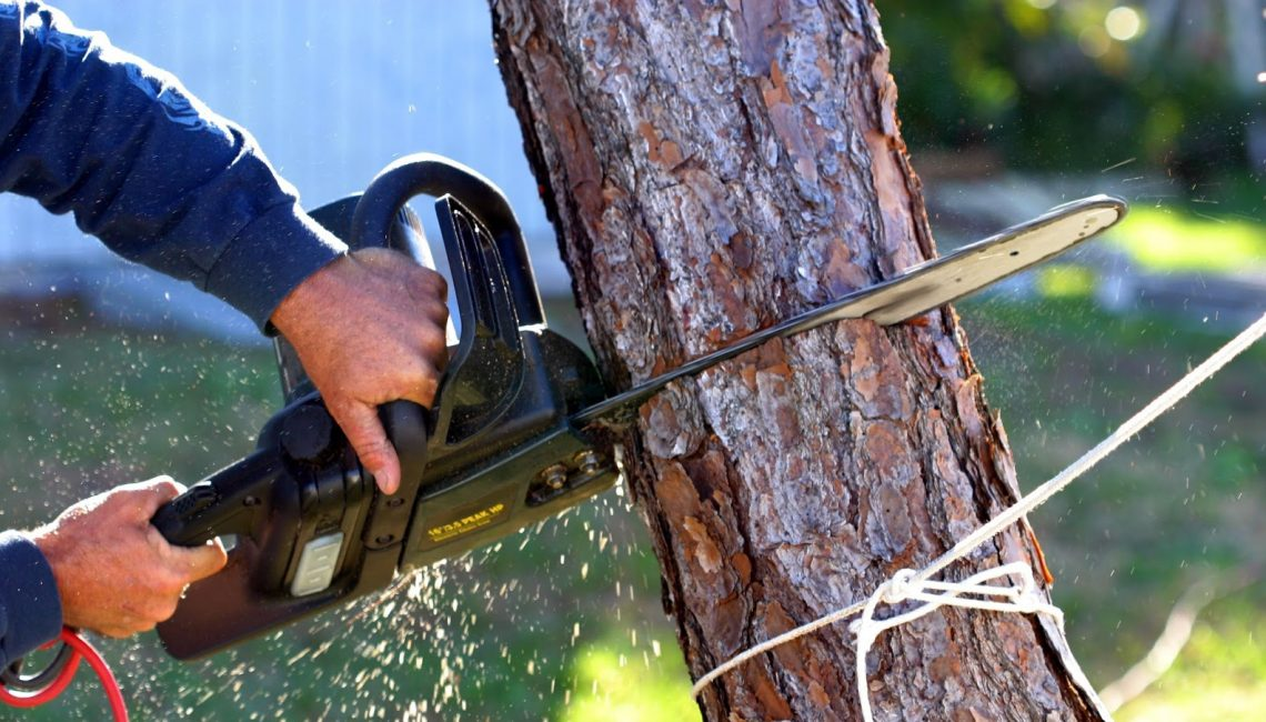 Different Methods of Tree Removal And How They Differ From Each Other