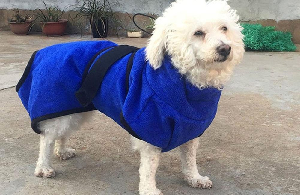 Choosing The Right Dog Towel For Your Pet