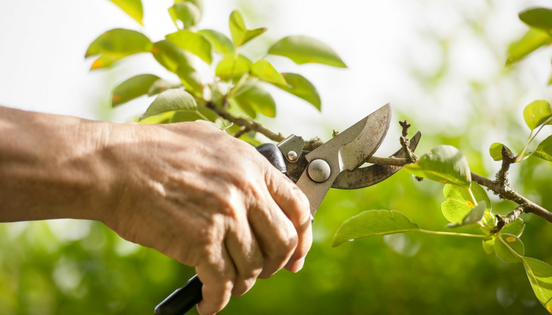 Things You Should Know About Hiring a Tree Pruning Service