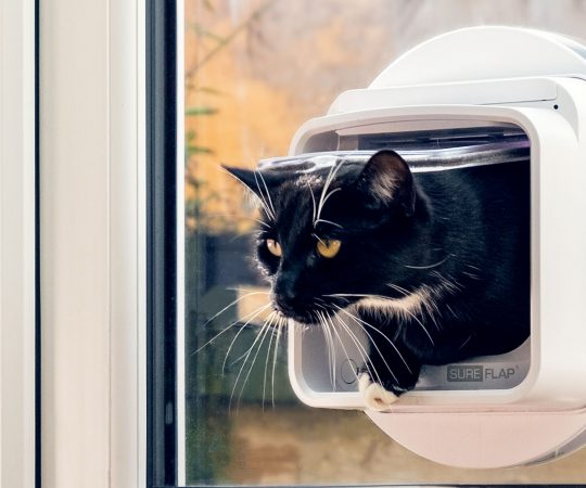 Factors to Take into Consideration While Investing in a Cat Flap