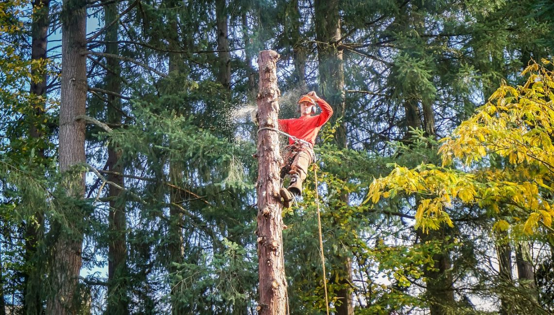 Mistakes You Must Avoid When Hiring a Tree Removal Company