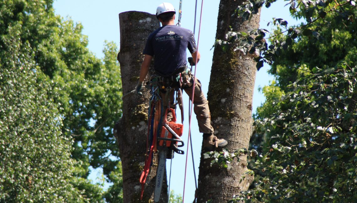 How Are Tree Service Prices Calculated?