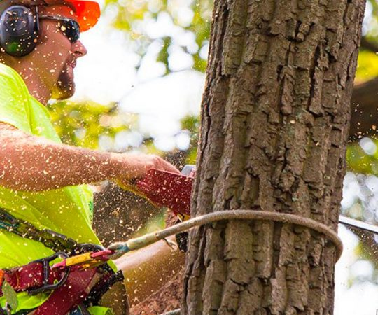 The Perks of Hiring Professional Tree Removal Services