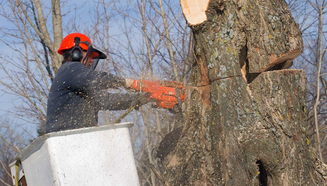 Benefits of Going to a Tree Removal Service