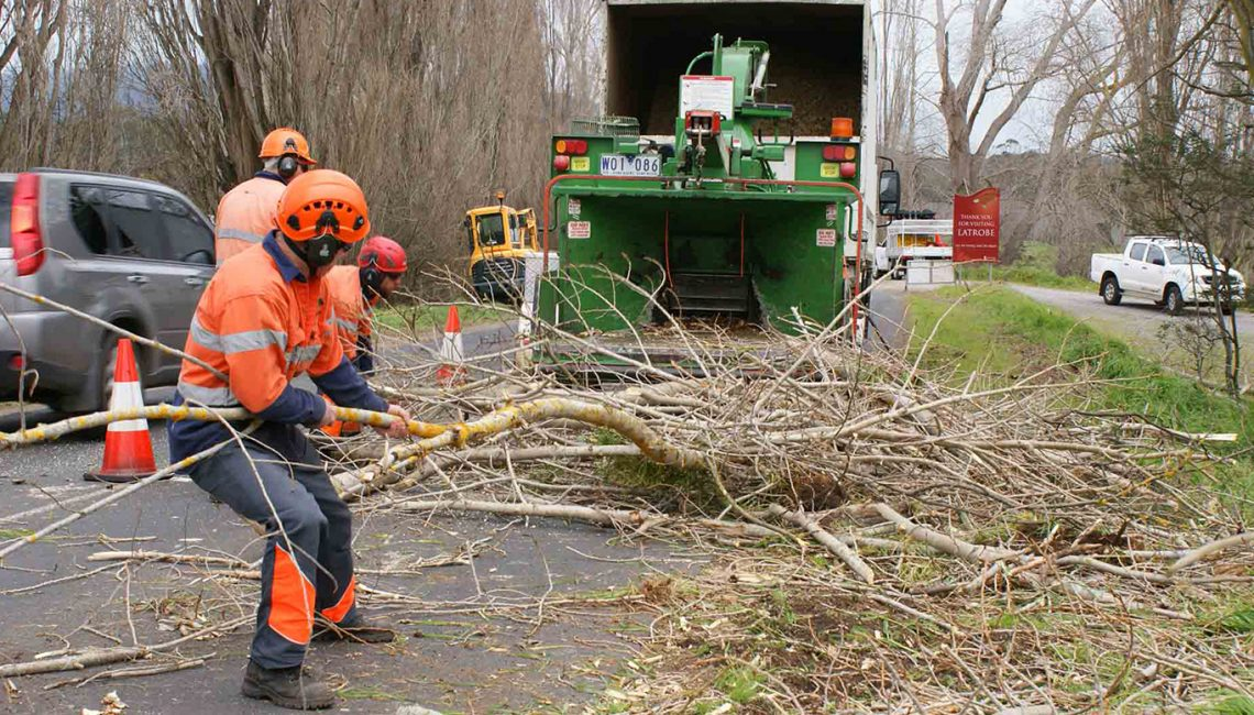 Always Call in a Tree Service Provider