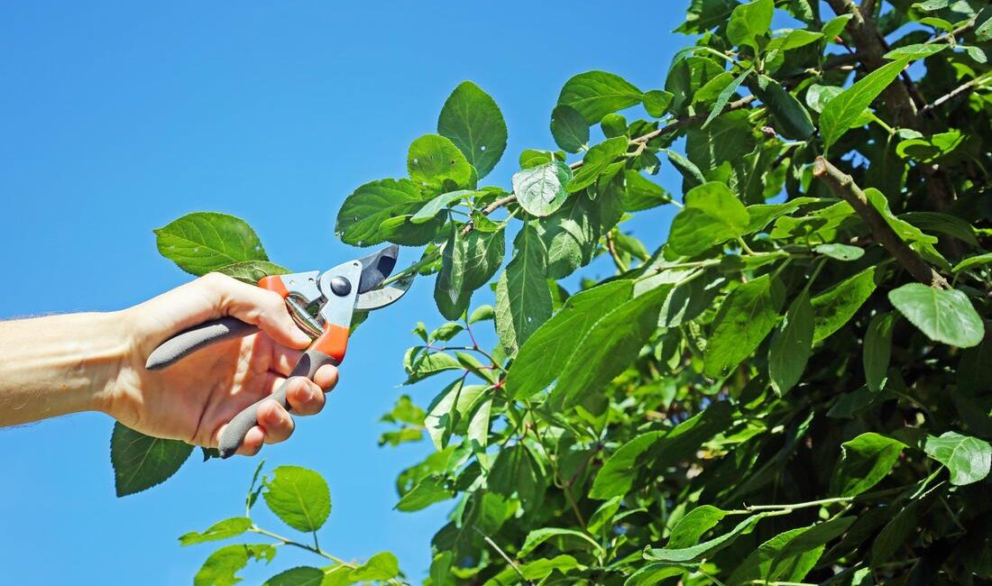 Bad Cuts in Tree Pruning You Should Avoid at All Costs