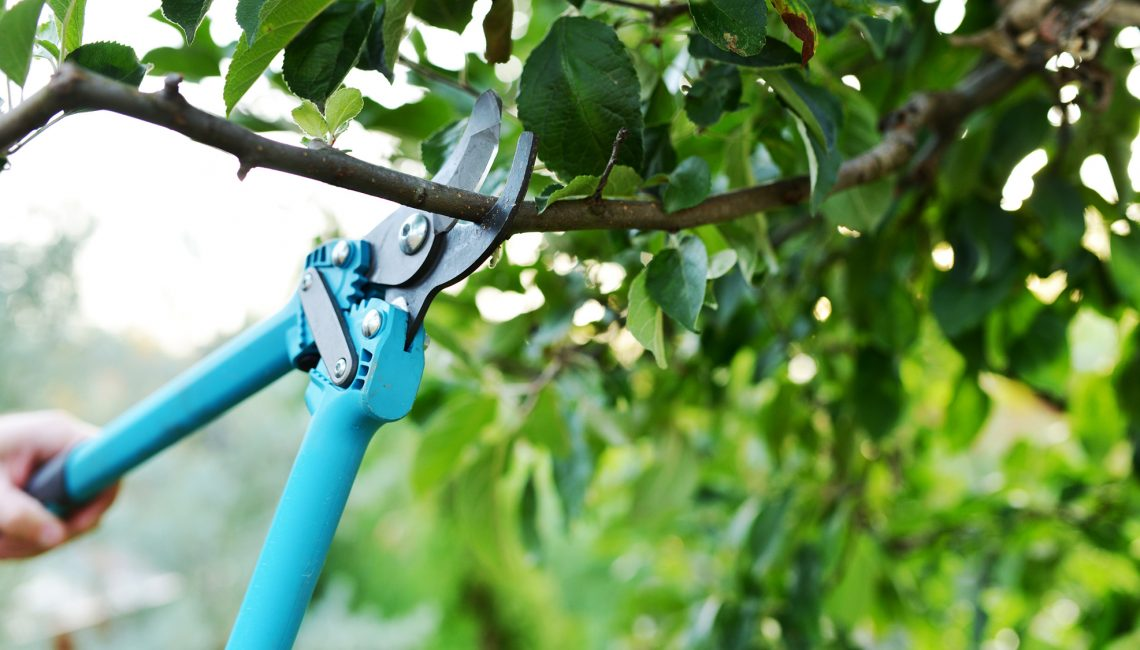 Prevent Cat Climbing With Tree Pruning