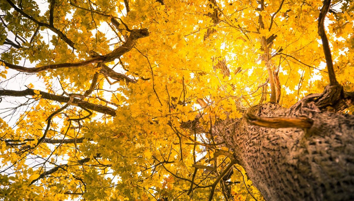 The Importance of Hiring Good Tree Service