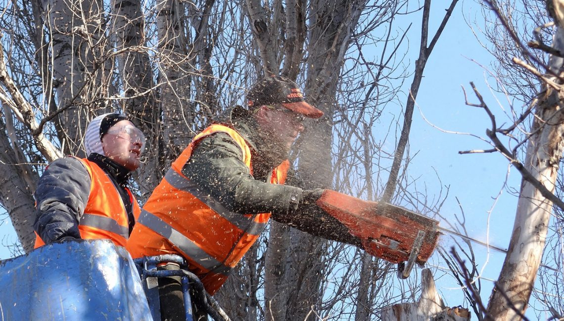 Showing Your Kids The Tree Removal Process